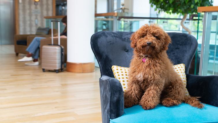 Pet friendly at Staybridge Suites Liverpool